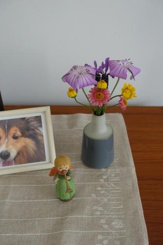 テラスを彩る花々_c0070136_10220154.jpg