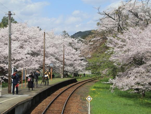 2017年 4月 樽見鉄道 春 ハイモ230_d0202264_4424023.jpg