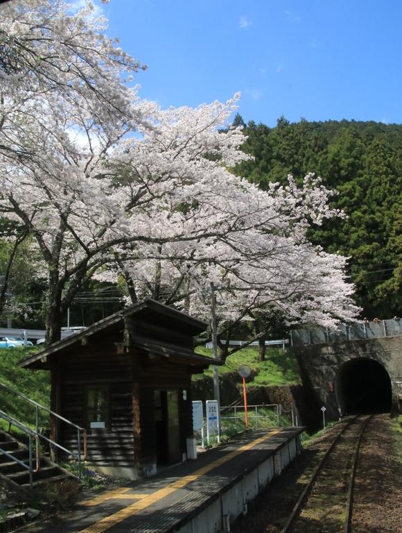 2017年 4月 樽見鉄道 春_d0202264_4515941.jpg