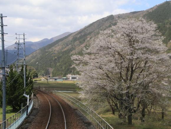 2017年 4月 樽見鉄道 春_d0202264_4521754.jpg