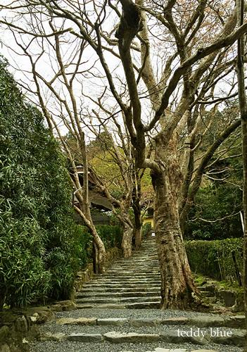 Kyoto trip  春の京都旅 洛北_e0253364_09053472.jpg