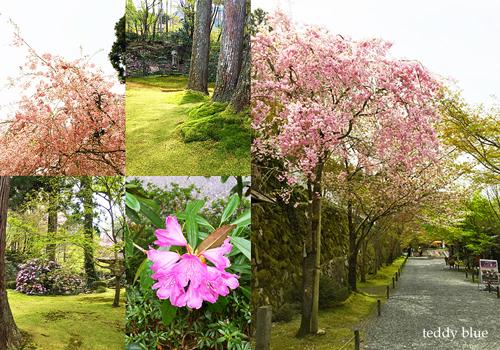 Kyoto trip  春の京都旅 洛北_e0253364_09103512.jpg