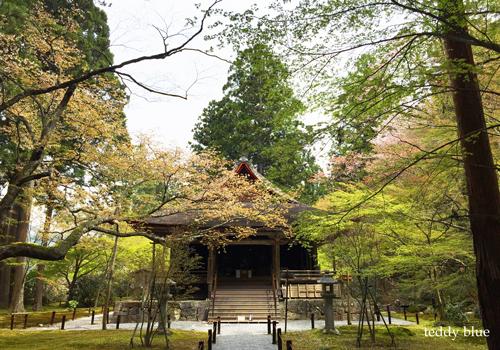 Kyoto trip  春の京都旅 洛北_e0253364_11023963.jpg
