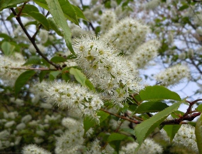 最後の桜と見頃の躑躅を楽しむ_b0102572_14291045.jpg