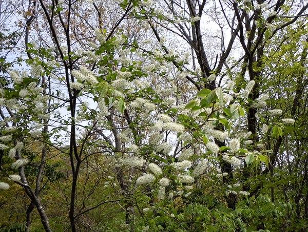 最後の桜と見頃の躑躅を楽しむ_b0102572_14292392.jpg