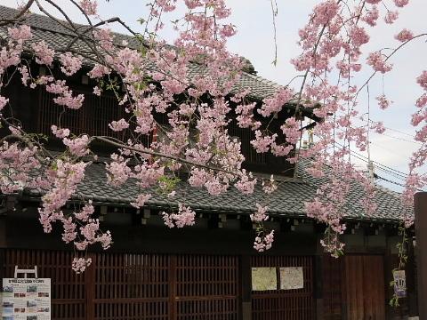 春は名のみ……♪ ♬_b0141773_21504762.jpg