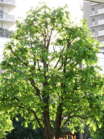 春は名のみ……♪ ♬_b0141773_21512714.jpg