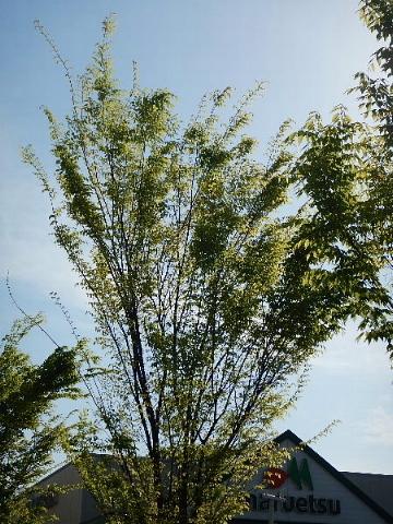 春は名のみ……♪ ♬_b0141773_21550271.jpg