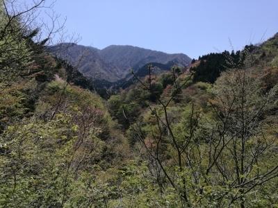 春の沢、山_c0145582_14013575.jpg
