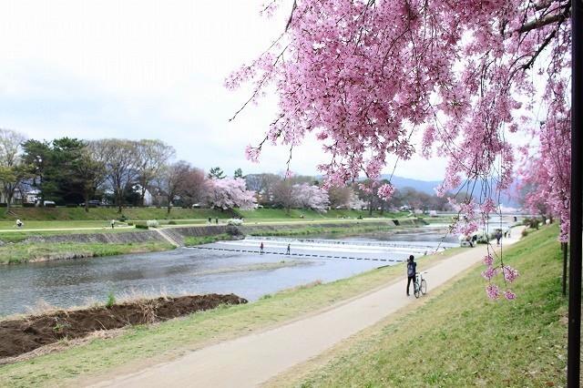 京都 半木の道 2017 春_f0374092_16415898.jpg