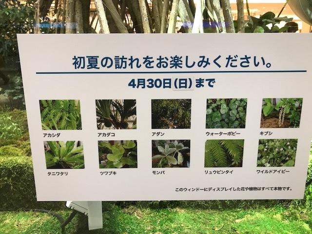 阪急百貨店 ショウウインドウ_f0204295_16025076.jpg
