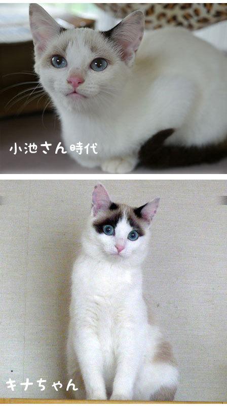 フリマ用品ご寄付ありがとう&猫の体色の変化_d0071596_22283722.jpg