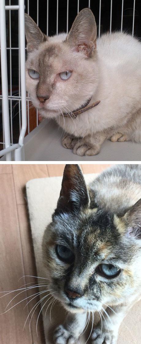 フリマ用品ご寄付ありがとう&猫の体色の変化_d0071596_22305943.jpg