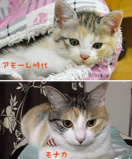 フリマ用品ご寄付ありがとう&猫の体色の変化_d0071596_22374139.jpg