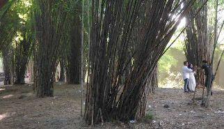 hutan bambu_a0051297_21344381.jpg