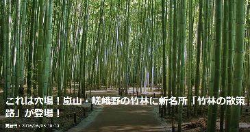 hutan bambu_a0051297_22014425.jpg