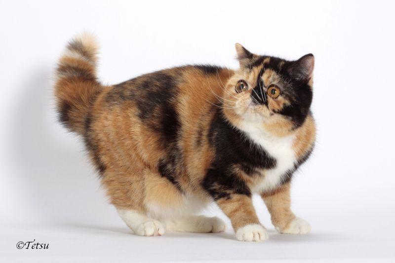 エキゾチックショートヘアー 子猫家族募集 ブラック&ホワイト 男の子_e0033609_22055301.jpg