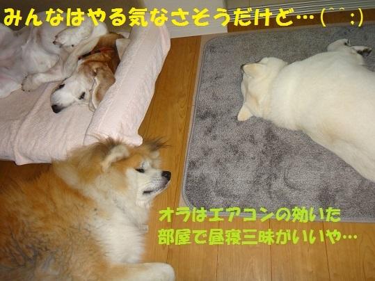 f0121712_08163210.jpg