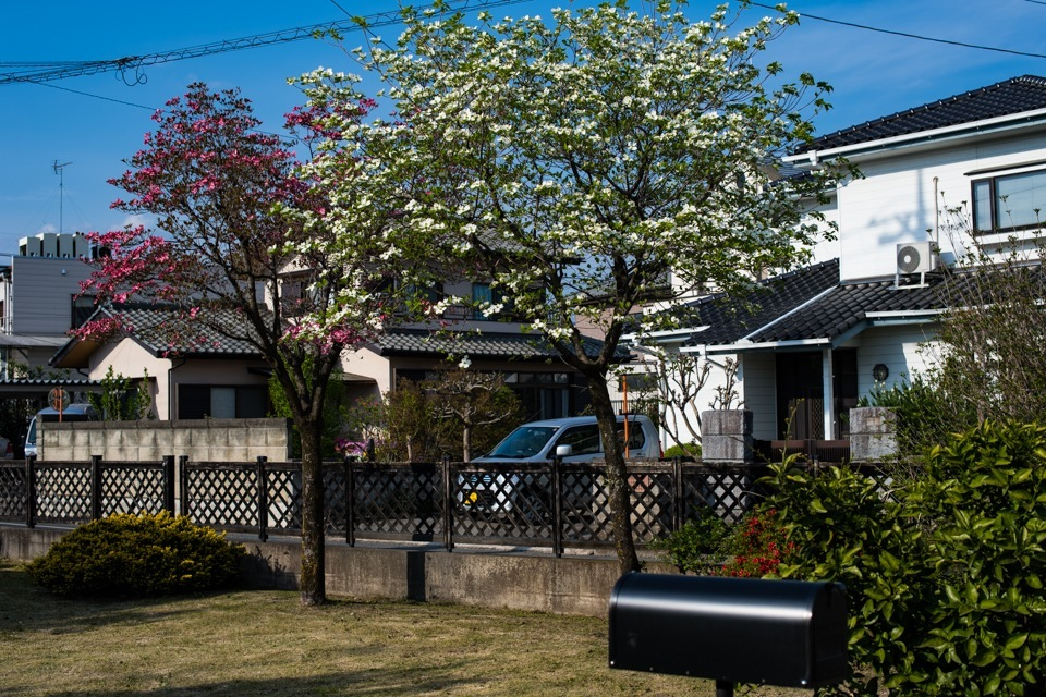 Tulips  ・・・全国都市緑化横浜フェア・・_f0333031_05273951.jpg