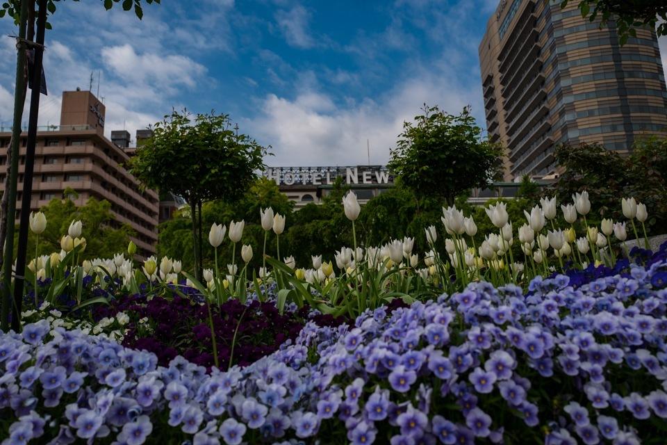 Tulips  ・・・全国都市緑化横浜フェア・・_f0333031_05283153.jpg