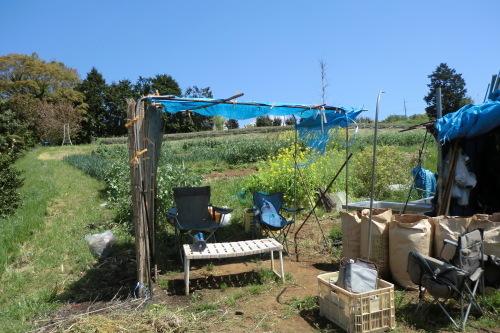 ジャガイモの土寄せ(2度目)_b0137932_17321212.jpg