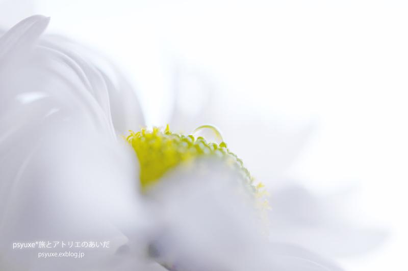 Flower Photograph #7_e0131432_17234316.jpg