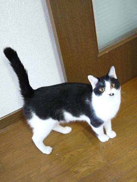 猫のお留守番 みこくん編。_a0143140_20593251.jpg