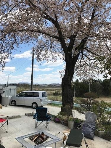 桜の木の下で_e0211357_13221646.jpg