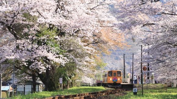 2017年 樽見鉄道 春 谷汲口駅にて!_d0202264_13214230.jpg