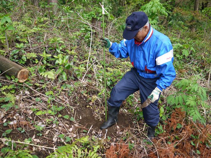 六国見山植樹本数306本に、実生のイロハモミジ5本追加4・27_c0014967_1533123.jpg