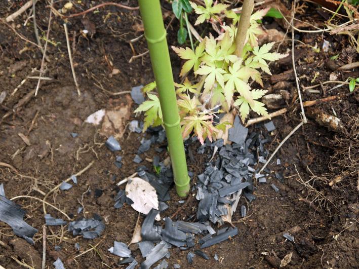 六国見山植樹本数306本に、実生のイロハモミジ5本追加4・27_c0014967_15334954.jpg