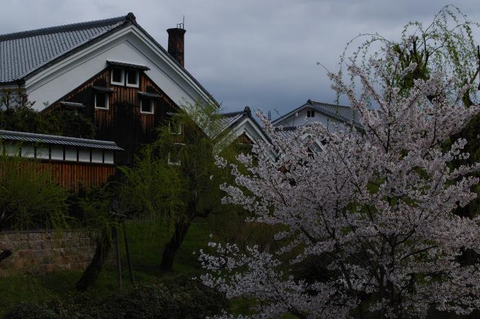 桜  2017  伏見 中書島界隈_f0021869_22255896.jpg