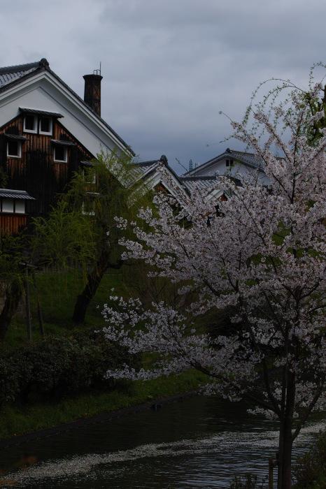 桜  2017  伏見 中書島界隈_f0021869_22282833.jpg