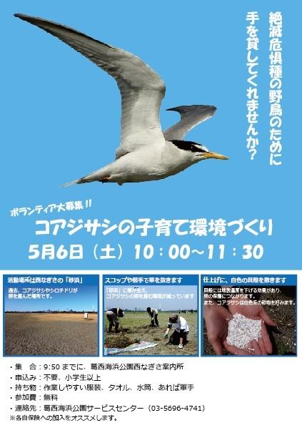 ★コアジサシの保護対策にご協力お願いします_e0046474_20055236.jpg