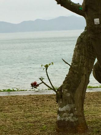 あんな下にデイゴの花が!_e0028387_00184303.jpg