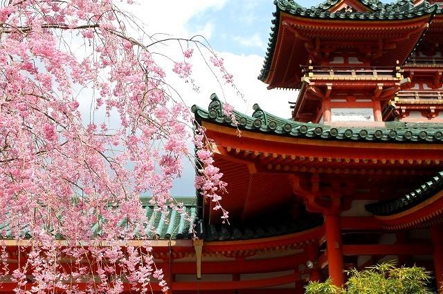 京都 平安神宮の桜 2017_f0374092_21433847.jpg