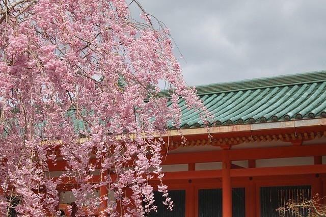 京都 平安神宮の桜 2017_f0374092_21444753.jpg