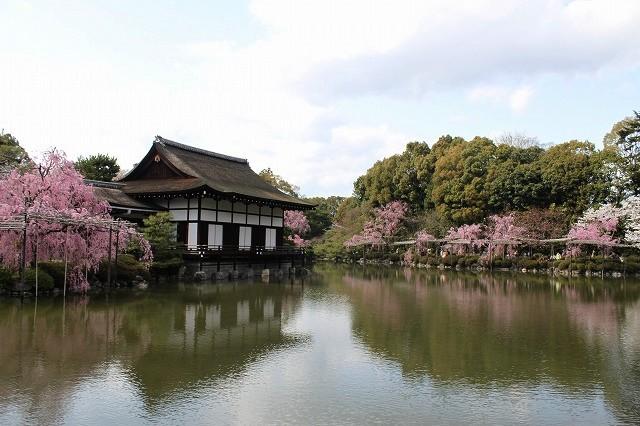 京都 平安神宮の桜 2017_f0374092_21514229.jpg