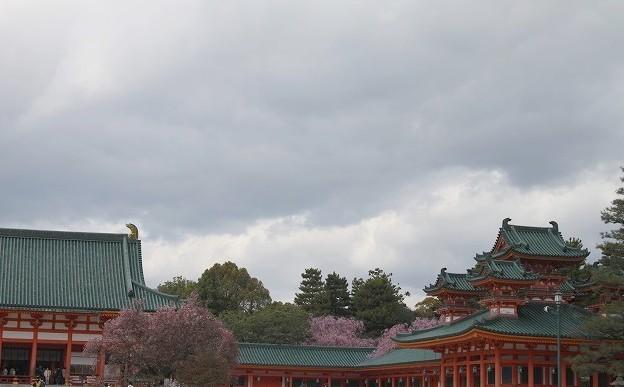 京都 平安神宮の桜 2017_f0374092_21542381.jpg