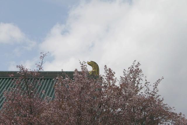京都 平安神宮の桜 2017_f0374092_21550131.jpg