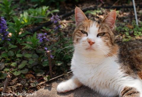お主も猫よのぉ~_b0253205_04414071.jpg