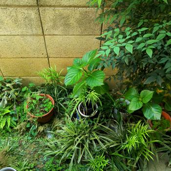 ガーデングッズも実家に移しました_a0275527_19124502.jpg