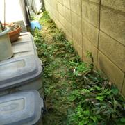 ガーデングッズも実家に移しました_a0275527_19124586.jpg