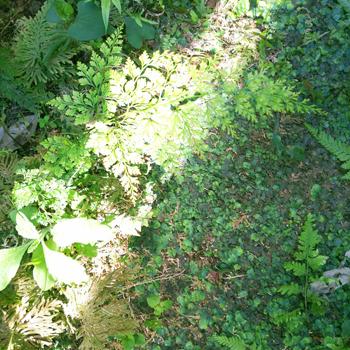 ガーデングッズも実家に移しました_a0275527_19124670.jpg
