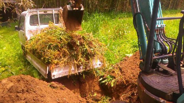 来年は除草剤を使うぞ_b0274329_13001282.jpg