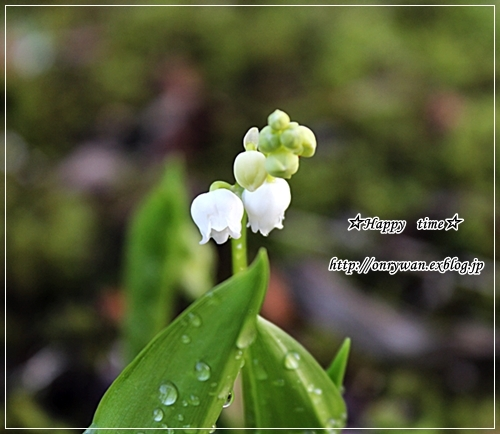 新緑の季節です♪_f0348032_17551421.jpg