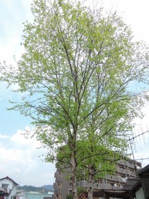 次々 春が。。_e0099359_13203237.jpg