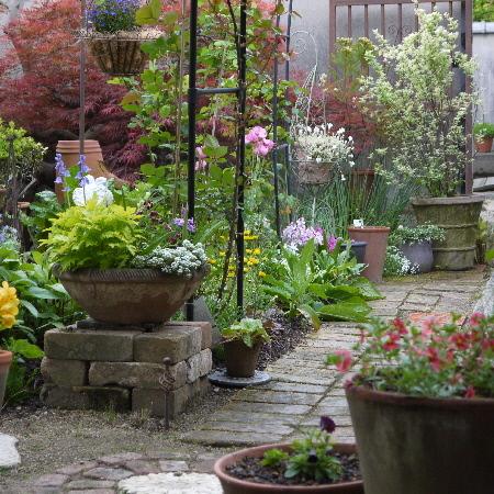 今朝の庭模様_c0055363_12490409.jpg