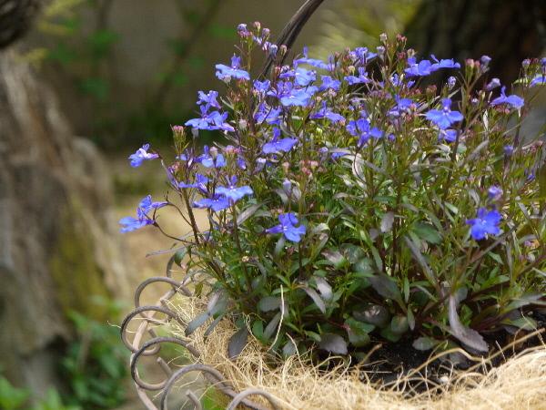 今朝の庭模様_c0055363_12510063.jpg