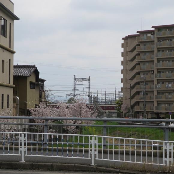 秋篠川の源流をたどる(歩いて)_c0001670_17051594.jpg